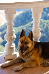 Rocky, our beautiful friend & resident dog