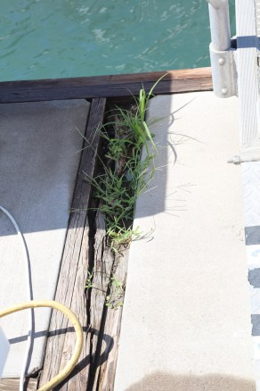 Con: Grass Thriving in the dry rot.