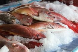 Amazing Fish Market