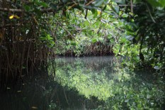 Narrow passages thru mangroves