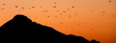 Ptice na otoku Isla Rasa