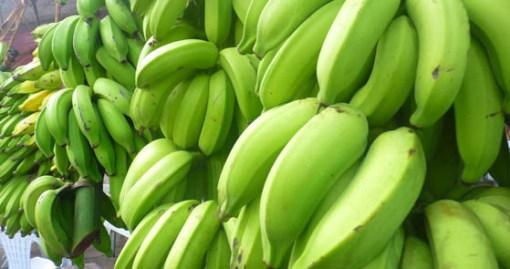 Banane visijo pred skoraj vsako gostilno in lahko si jih zastonj naberemo za prilogo h kosilu
