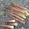 ハチクの勢い(淡竹採り)