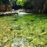 川の神様に感謝!|2016渓流フライフィッシングまとめ