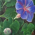 morning-glory-final_edited-1