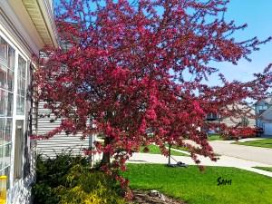 spring_4646