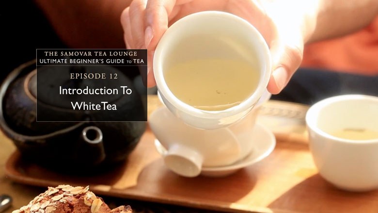 12. Introduction To White Tea