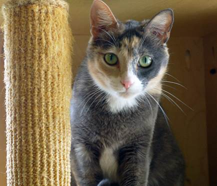 Katniss. Photo: Courtesy of the San Clemente-Dana Point Animal Shelter