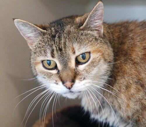 Olga. Courtesy of the San Clemente/Dana Point Animal Shelter