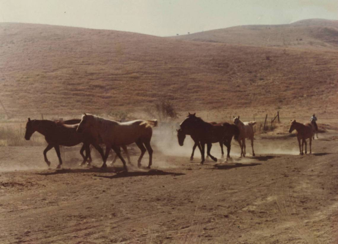 Horses are photographed running through San Clemente in this photo, taken circa 1970. The hills of the city's backcountry are far more populated now than more than 40 years ago.  Photo: Courtesy of OC Public Libraries/Olivares Romero, Teeter Marie