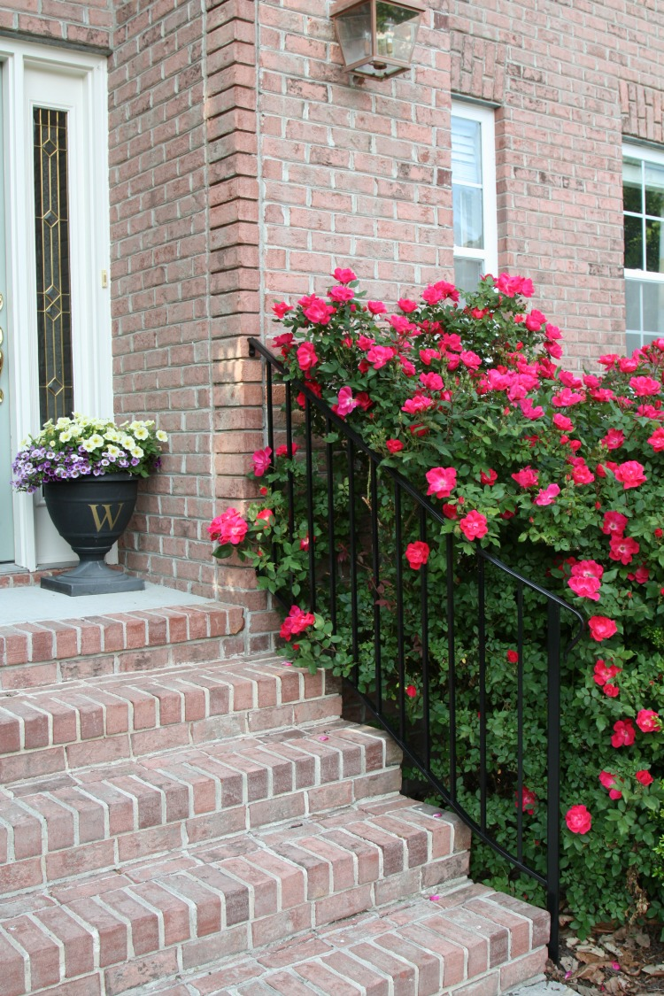Relaxing North Carolina When To Prune Knockout Roses When To Prune Knock Out Roses Sand Sisal When To Prune Knockout Roses Florida How houzz-02 When To Prune Knockout Roses