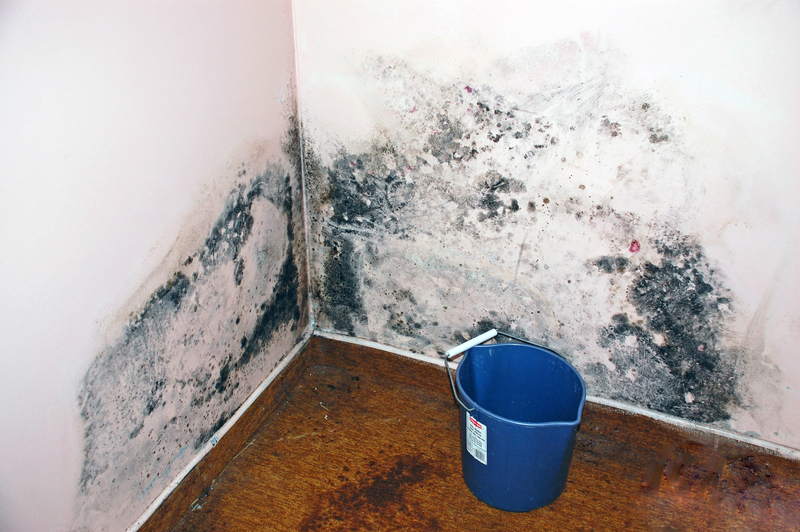 Mold in Home San Diego CA: A Major Health Problem for Some