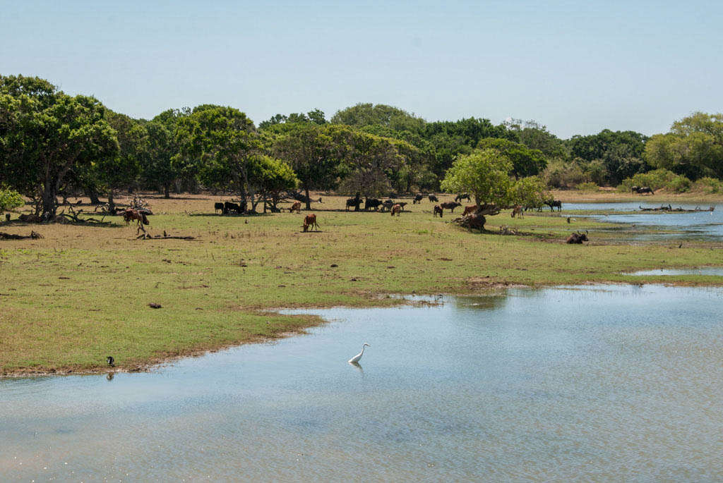 Sri_Lanka_Yala_National_Park_11