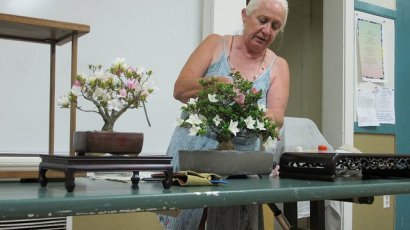 Ann Erb preparing a tree for presentation
