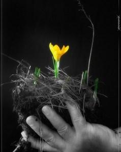 buttercup in nest