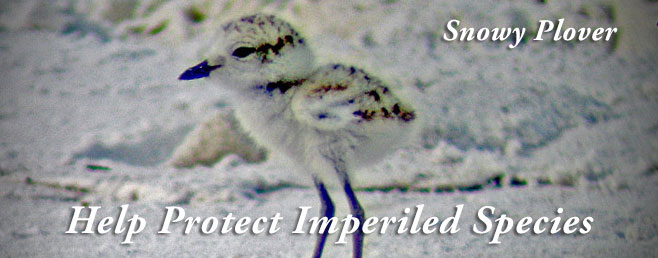 Help Protect Imperiled Species