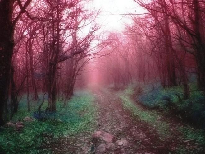 magic-forest-path-1629789-1920x1440
