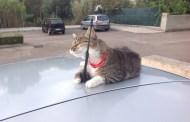 I dementi dei gattini su Facebook (di Francesco Giorgioni)
