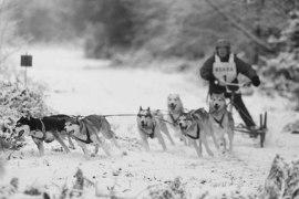 Six dog team