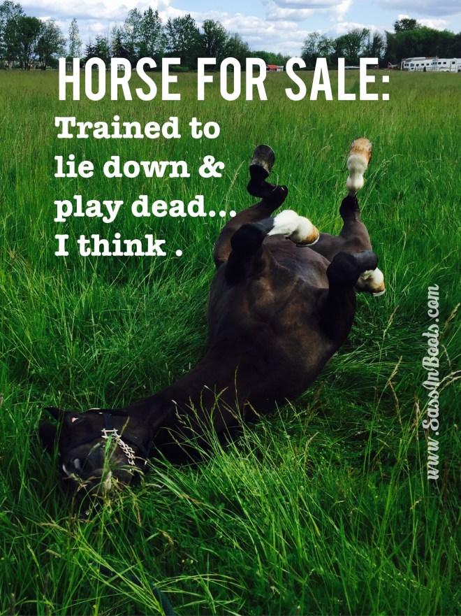Horse Sale Ad Lies Play Dead