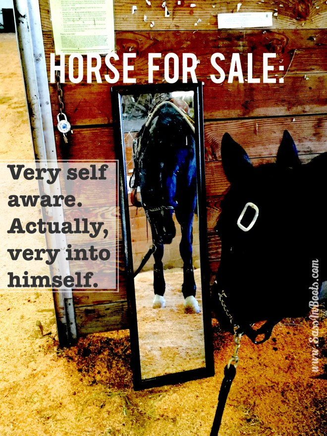 Horse Sale Ad Lies Self Aware
