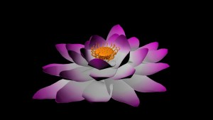 Lotus in color with seed pod & stamen
