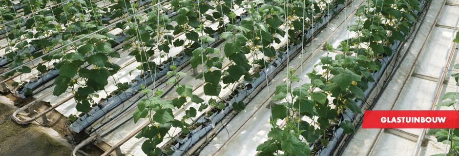 glastuinbouw-schellekens-totaalprojecten