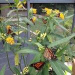 The Butterfly Farm and Organizing Class Libraries