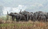 elephants_rampage