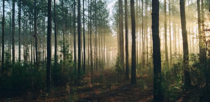 Quanti alberi ci sono sulla terra scientificast for Quanti deputati ci sono
