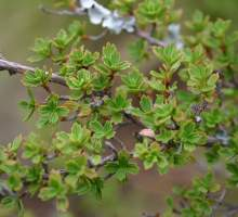 Ritorno alla vita –  Le piante della resurrezione e il futuro del cibo