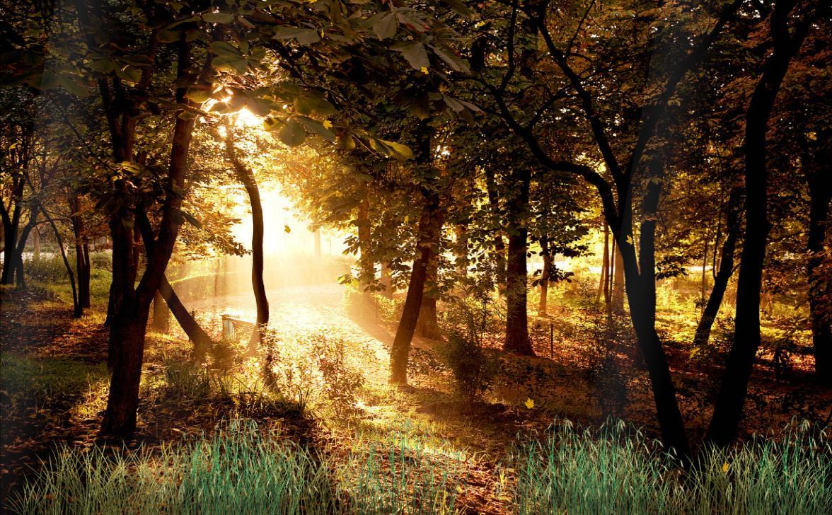 Beautiful Forest Screensaver