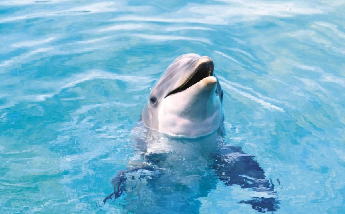Happy Dolphins Screensaver