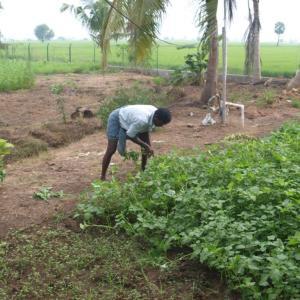 Spinazie uit eigen tuin