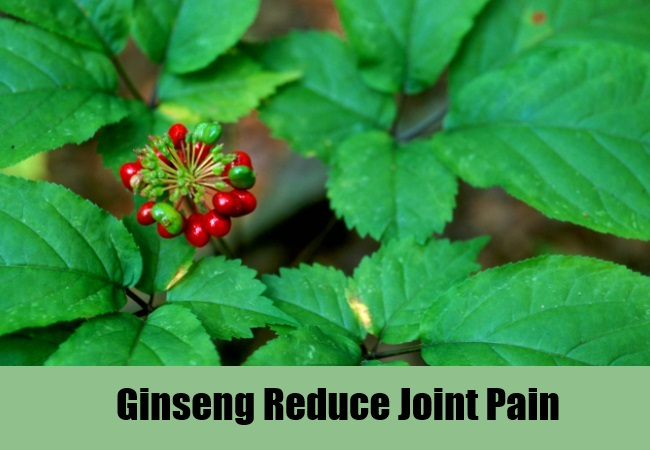 Ginseng Reduce Joint Pain