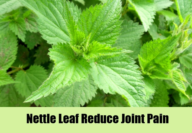 Nettle Leaf Reduce Joint Pain