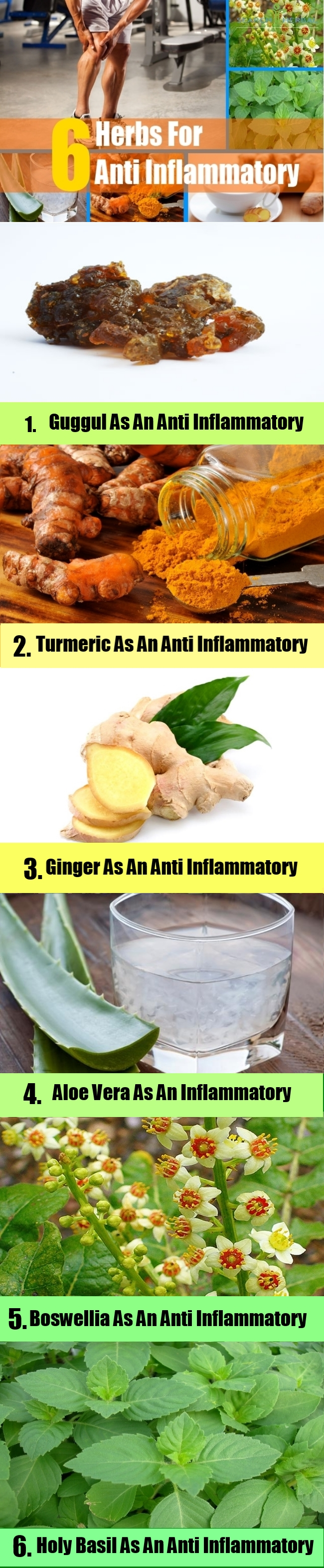 Herbs For Anti Inflammatory3