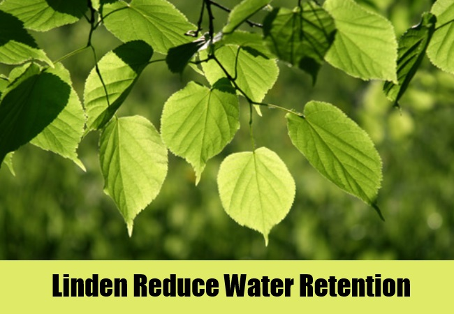 Linden Reduce Water Retention