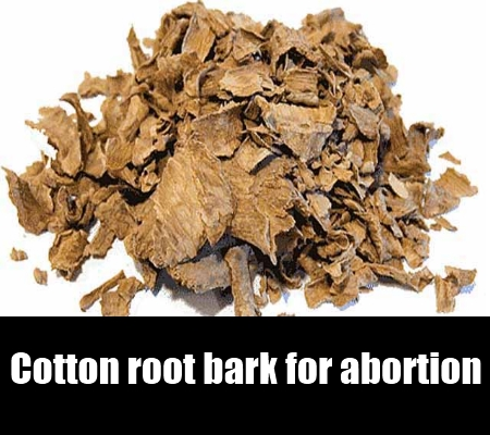 cotton root bark