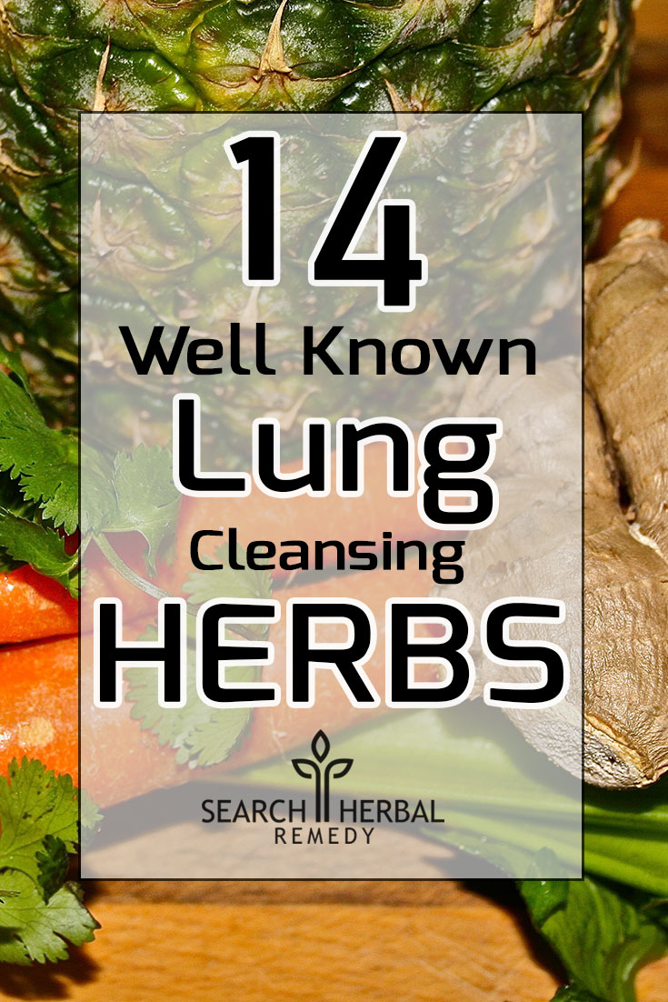 14-well-known-lung-cleansing-herbs