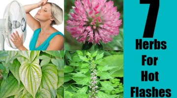 7 Herbs For Hot Flashes
