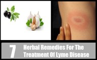 7 Herbal Remedies For The Treatment Of Lyme Disease