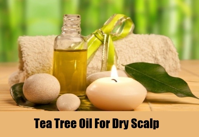 Tea Tree Oil For Dry Scalp
