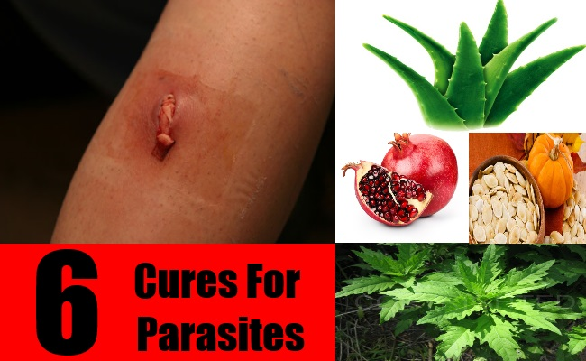 6 Cures For Parasites