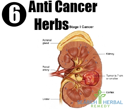 anti cancer herbs