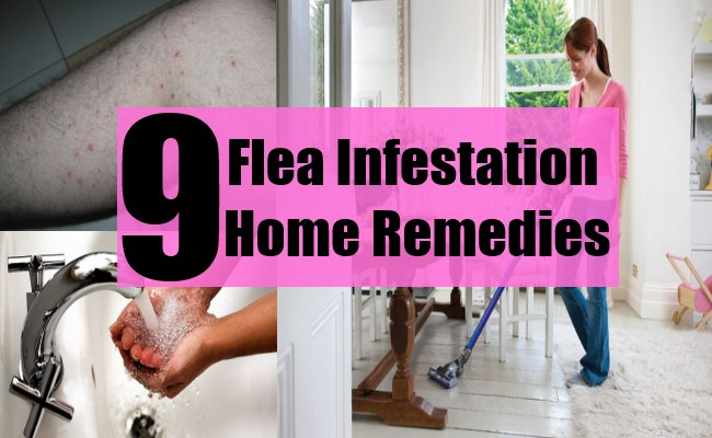 9 Flea Infestation Home Remedies