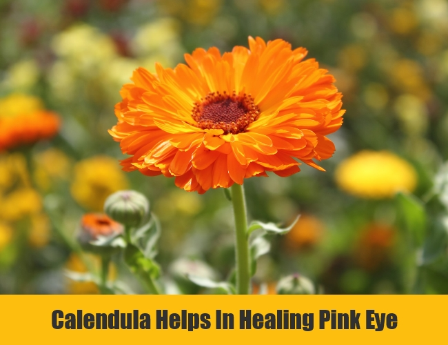Calendula Helps In Healing Pink Eye