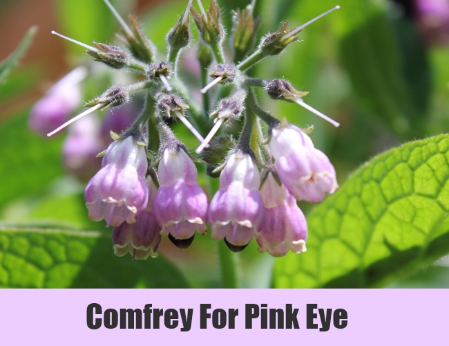 Comfrey For Pink Eye