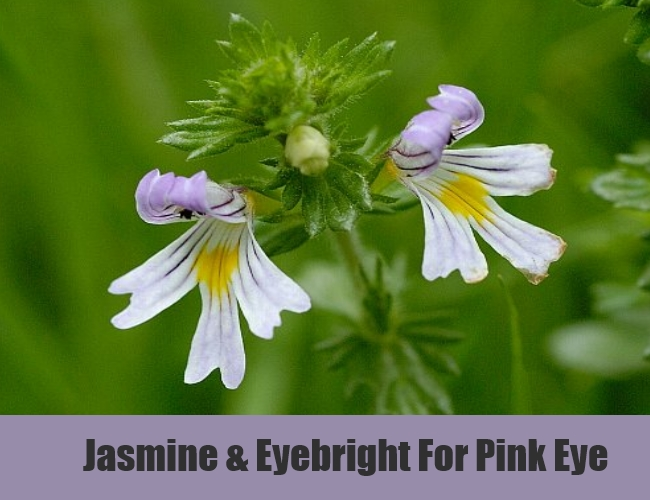 Jasmine & Eyebright For Pink Eye