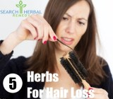 5 Herbs For Hair Loss